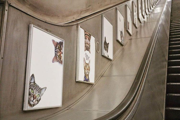 gatos_en_subterraneo_londres10