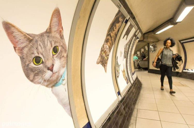 gatos_en_subterraneo_londres11