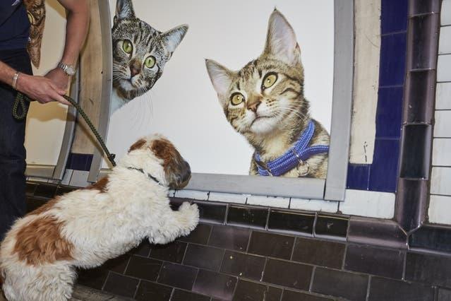 gatos_en_subterraneo_londres3