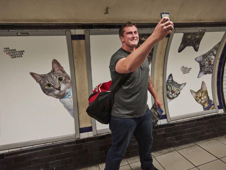 gatos_en_subterraneo_londres5