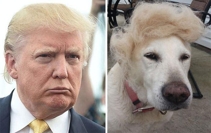 humanos-perros-4