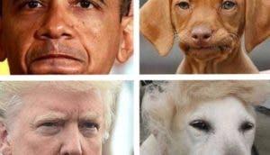 humanos-perros-id