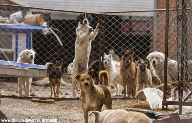 millonario-rescata-mil-perros-1
