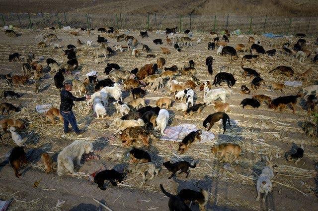 millonario-rescata-mil-perros-10