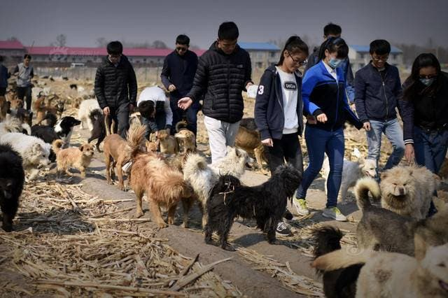 millonario-rescata-mil-perros-13