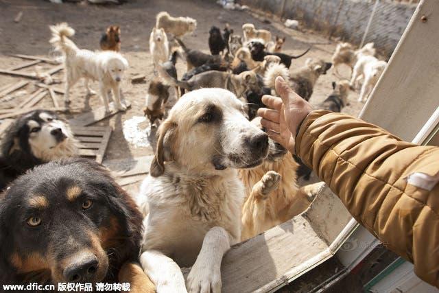 millonario-rescata-mil-perros-7