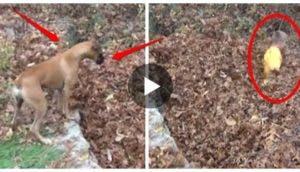 perro-confundido-hojas4
