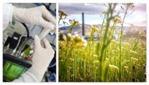 plantas-digieren-celulosa-biocombustibles-1