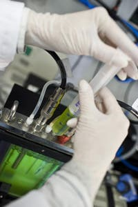 plantas-digieren-celulosa-biocombustibles-2