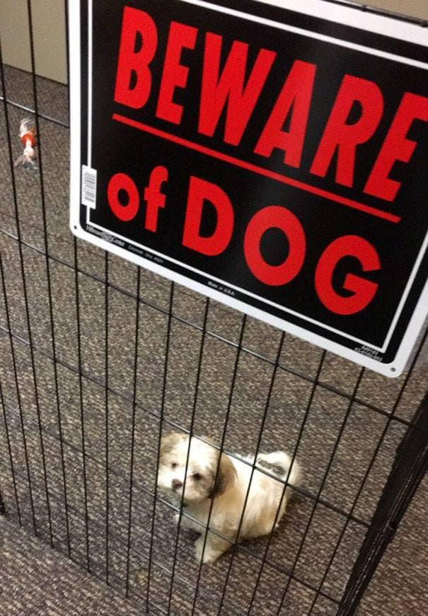 adorables-perros-peligrosos-16