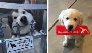 adorables-perros-peligrosos-id