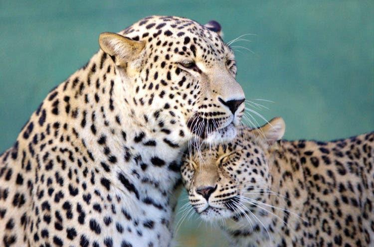 amor_animal_2