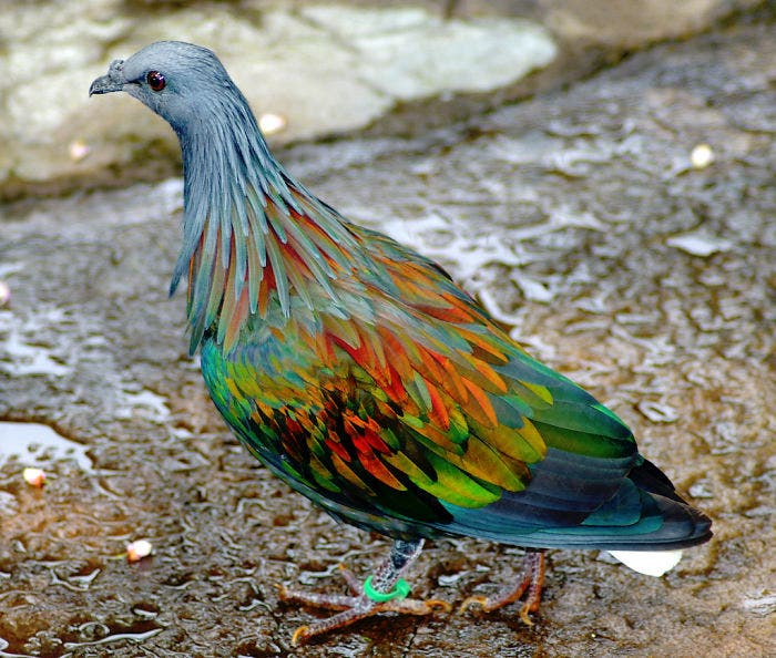 animales-coloridos-3