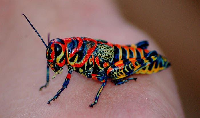 animales-coloridos-7