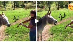 burro-canta-violin2