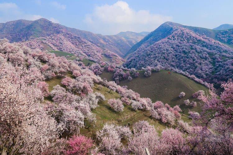 campos-flores-china-1