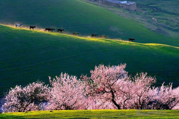 campos-flores-china-10