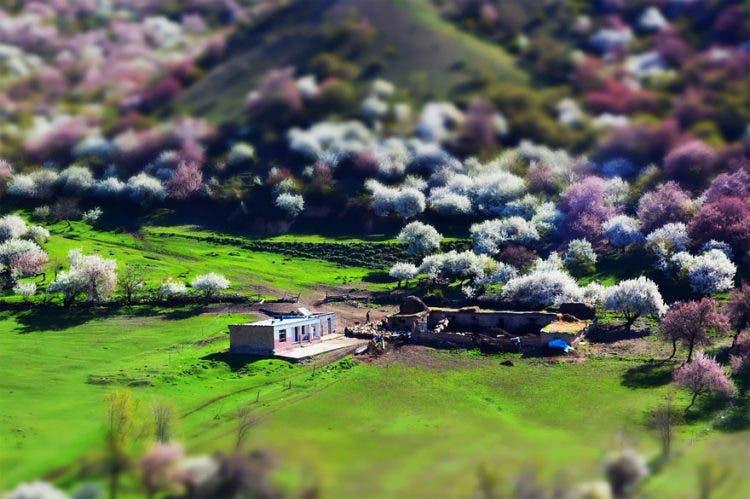 campos-flores-china-11
