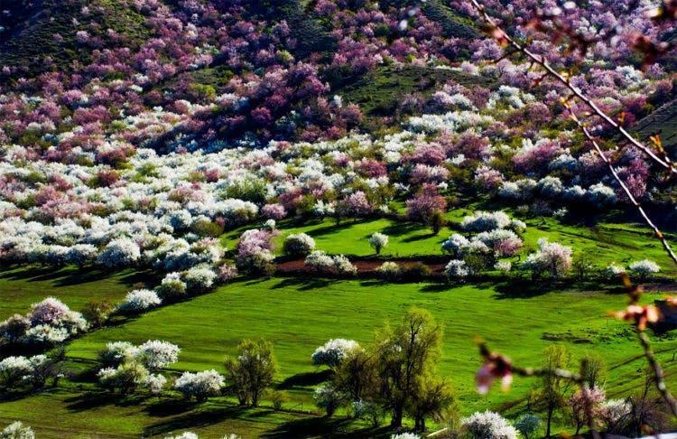 campos-flores-china-3
