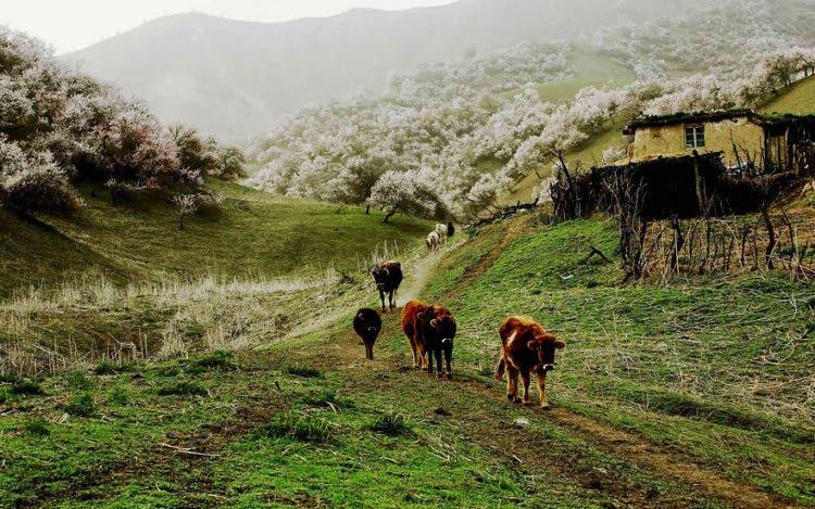 campos-flores-china-6