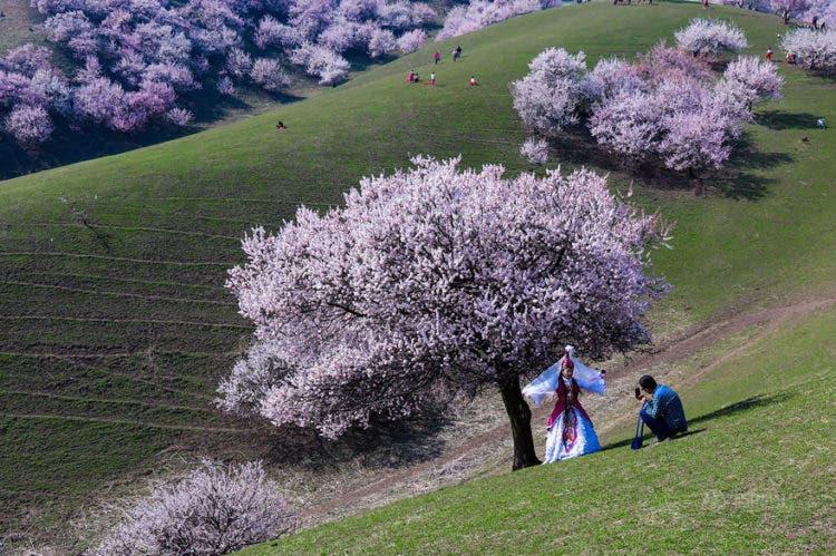 campos-flores-china-7