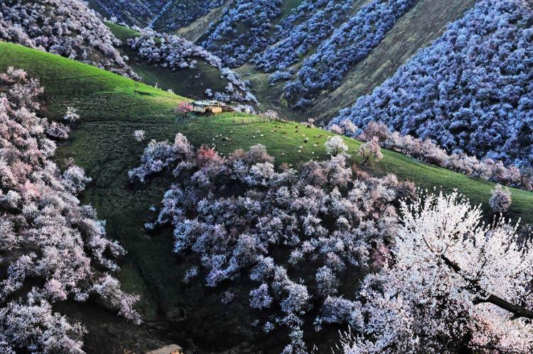 campos-flores-china-8