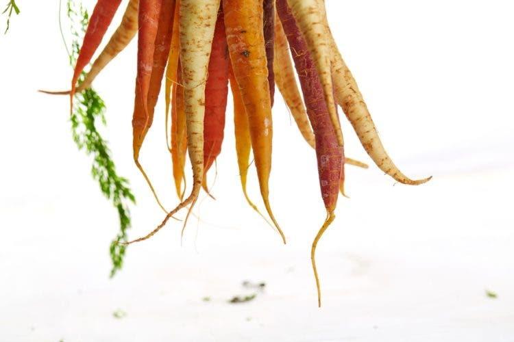 conservar_zanahorias