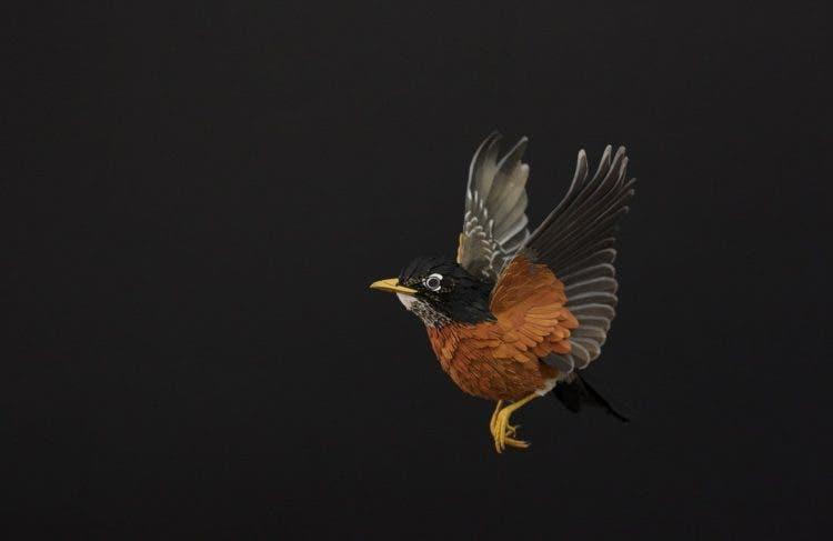 esculturas-aves-papel-4
