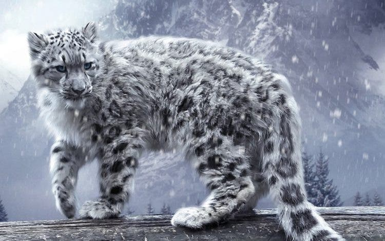 especies-felinas-peligro-extincion-2