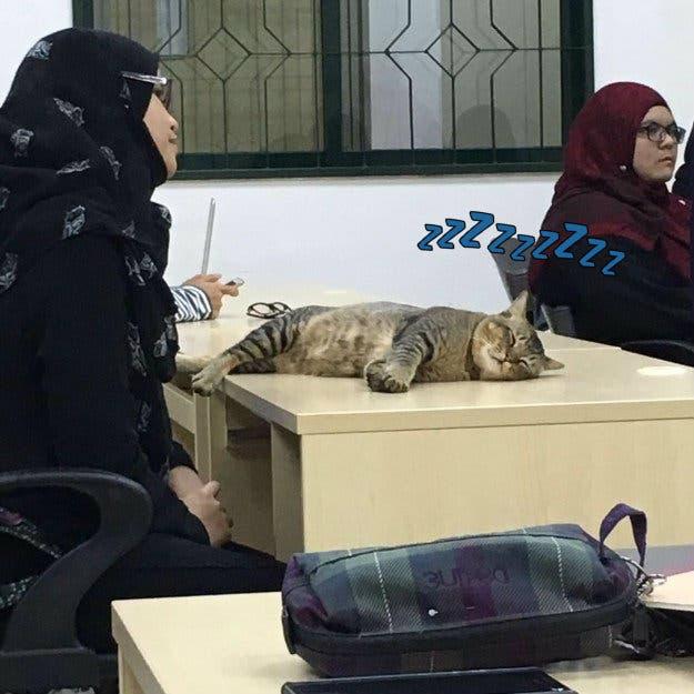 gato_en_clase_2