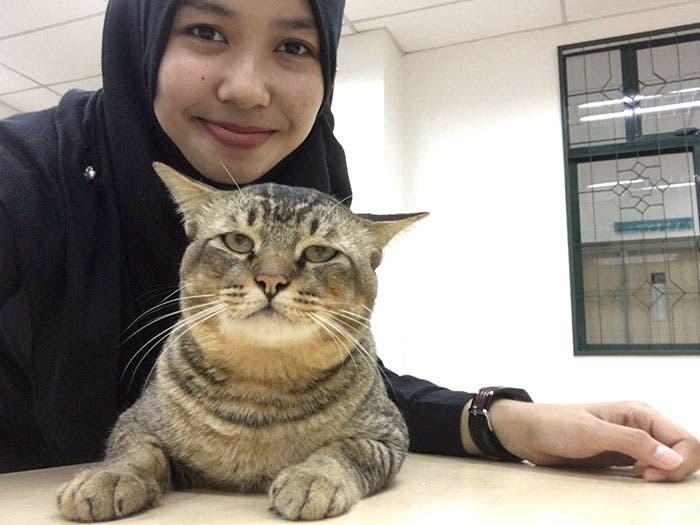 gato_en_clase_4