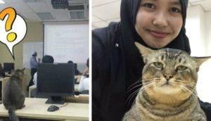 gato_en_clase_p