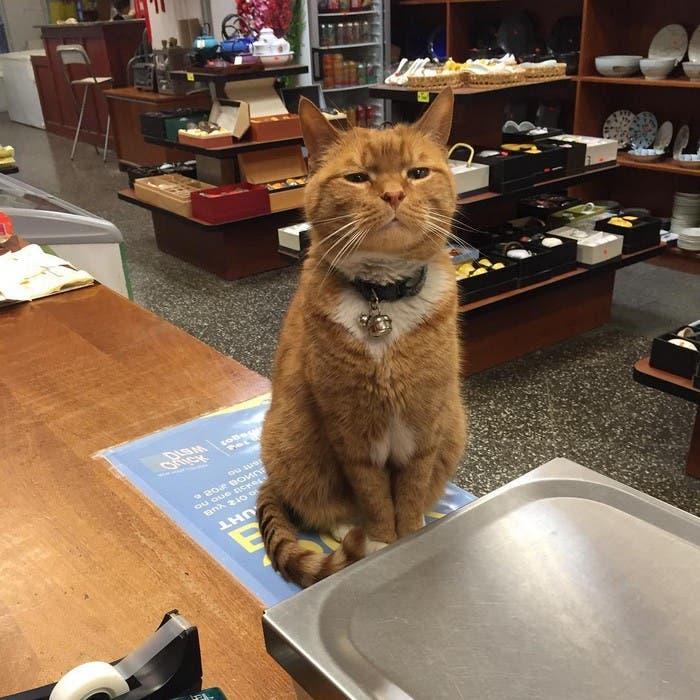 gato_en_supermercado_5