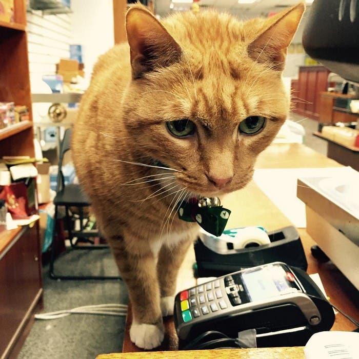 gato_en_supermercado_6