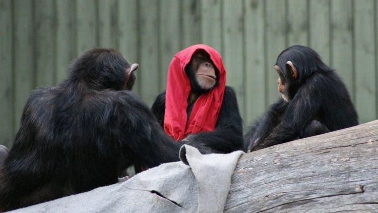 hermosa-chimpance-madre-hija-1