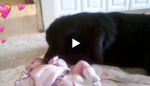 perro-conoce-a-bebe