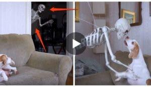 perro-esqueleto-falso-broma-halloween5