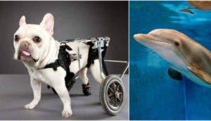 sorprendentes-animales-con-discapacidades