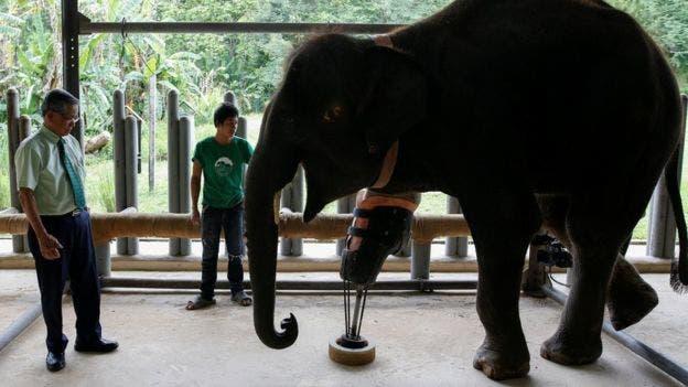 sorprendentes-animales-con-discapacidades-2