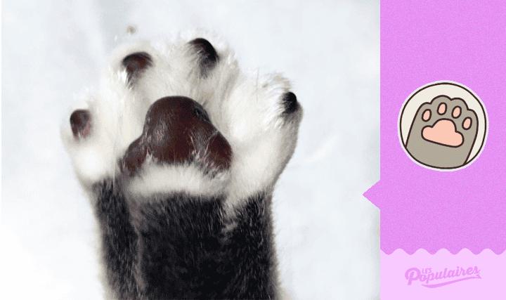 pusheen-cat-real-life13