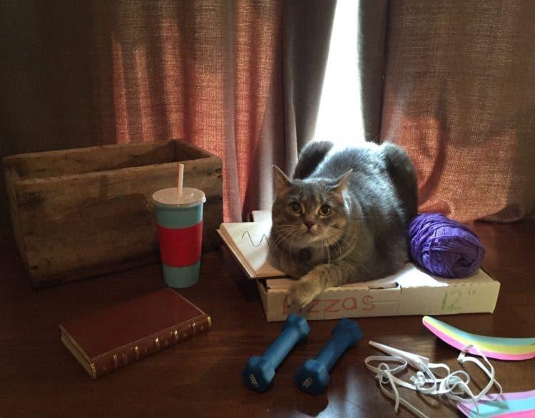 pusheen-cat-real-life14