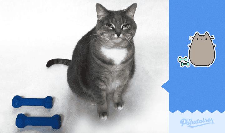 pusheen-cat-real-life2