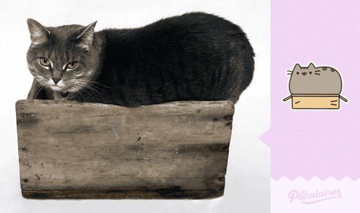 pusheen-cat-real-life3