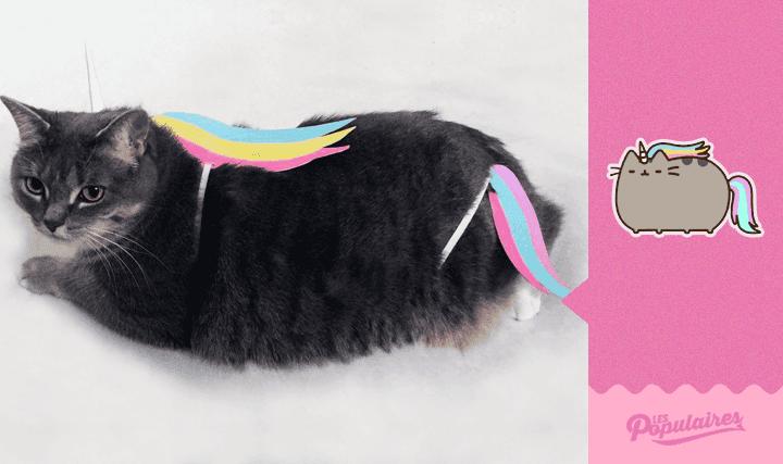 pusheen-cat-real-life8