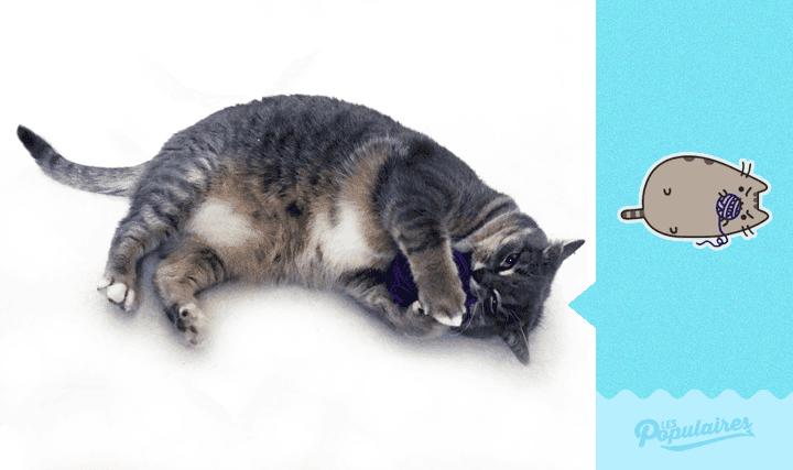 pusheen-cat-real-life9