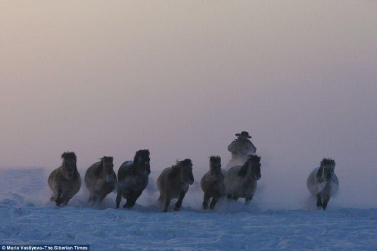 caballos-yakutos-10