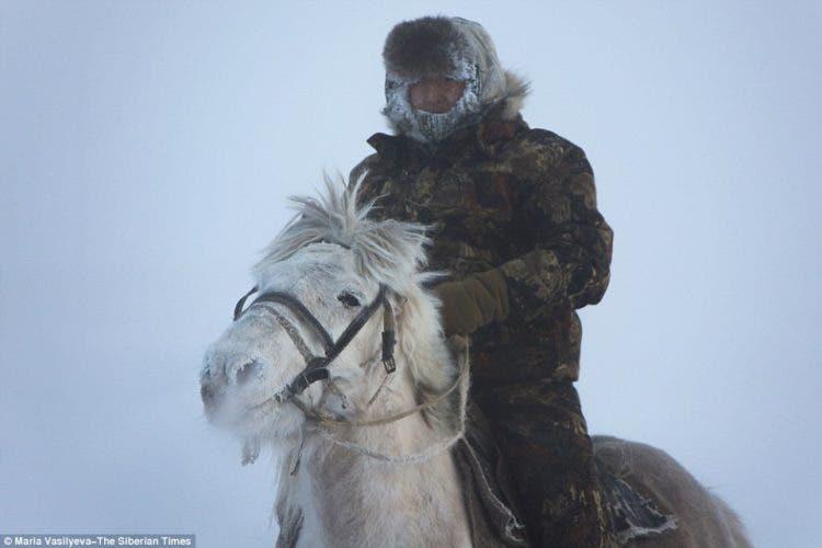 caballos-yakutos-13