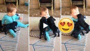 cachorros-atacan-a-bebe-portada