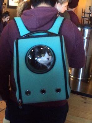 catpacks-mochilas-para-gatos1