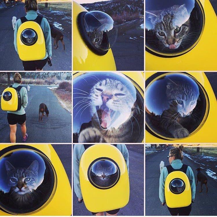 catpacks-mochilas-para-gatos2